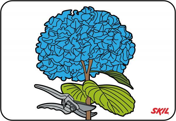 pruning hydrangeas rh skil co za hydrangea clip art free hydrangea clip art free